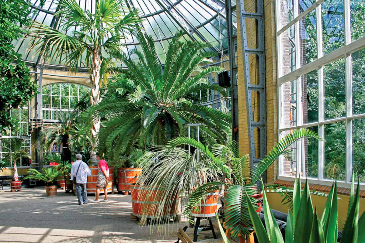 Hortus botanicus amsterdam binnenlocaties voor trouwfoto 39 s for Amsterdam b b centro